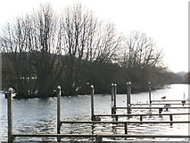 SU7682 : Wooded island on the river at Henley-on-Thames by Peter S