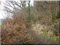 ST8541 : Restricted byway, Foxholes Plantation by Maigheach-gheal