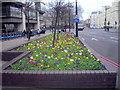 TQ3078 : Flower bed on Vauxhall Bridge London by PAUL FARMER