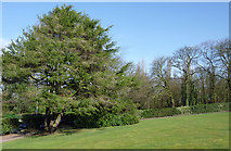 SO9097 : Landscaped ground at the Royal Wolverhampton School by Roger  Kidd