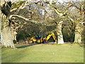 SU2414 : Hiding under the trees, Fritham by Maigheach-gheal