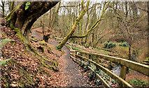 J4681 : Path, Crawfordsburn Country Park (4) by Albert Bridge