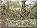 SE7665 : Howl Beck passing through woodland by Christine Johnstone