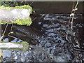 SU7432 : Gurgling Water Trough by Colin Smith