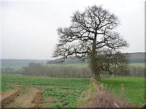 SE7365 : Winter tree above the Derwent by Christine Johnstone