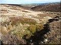SE0806 : Bilberry patch above Hey Clough by Christine Johnstone