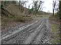 SU8517 : Byway and bridleway junction at the base of Bepton Down by Dave Spicer
