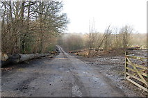 TQ7034 : Entrance to Combwell Woods by Julian P Guffogg