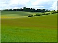 SU3281 : Farmland, Lambourn by Andrew Smith