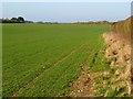 SU4537 : Farmland, Wonston by Andrew Smith