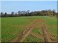 SU4539 : Farmland, Sutton Scotney, Wonston by Andrew Smith