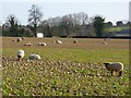 SU4738 : Farmland, Wonston by Andrew Smith