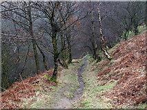 SK2078 : Footpath through birch woodland by Trevor Littlewood