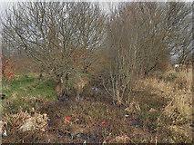 SD7908 : Bealey's Goit by David Dixon