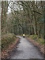 SX0872 : Camel Trail in Shell Woods  by David Smith