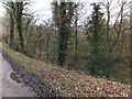 SX0670 : Woodland between Camel Trail and River Camel near Helland  by David Smith