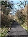 SX0267 : Camel Trail near Denby stables  by David Smith