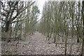 SU5174 : Path through the saplings by Bill Nicholls
