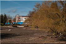 TQ4666 : Dried up Priory Pond by Ian Capper