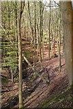 SK1789 : Climbing from Fairholmes towards Lockerbrook by Chris Morgan