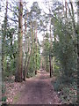 SU8363 : Edgebarrow Woods, Crowthorne by Gareth James