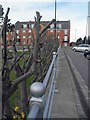 SJ3587 : Recent pruning by Steve  Fareham