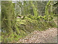 ST1008 : Moss covered back, Newcombe Common by Maigheach-gheal