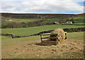 SE6797 : Supplementary feed, Farndale by Pauline E