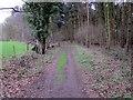 SJ5455 : Woodland at Peckforton Moss by Jeff Buck