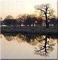 TQ1972 : Sunset at White Ash Pond, Richmond Park by Stefan Czapski