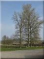 SE8467 : View to Settrington Wood by Pauline E