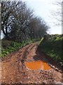 ST0108 : Bridleway to Cullompton from Rull Lane by David Smith