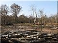 TQ4298 : Clearing Sunshine Plain by Roger Jones
