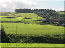 NY9546 : The valley of Bolt's Burn below West Farm by Mike Quinn