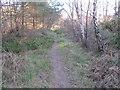 NJ0256 : Path in Fairyhills Wood by Alan Hodgson