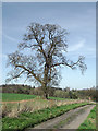 SO7988 : Oak tree and track north of Six Ashes, Staffordshire by Roger  Kidd