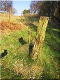 SH7357 : Footpath post marker by Chris McAuley
