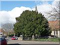 TQ4361 : Yew, High Street by Stephen Richards