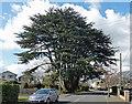 TQ4258 : Cedar, Aperfield Road by Stephen Richards