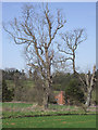 SO7988 : Oak trees north of Six Ashes, Staffordshire by Roger  Kidd