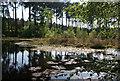 SJ5370 : Black Lake, Delamere: general view by Espresso Addict