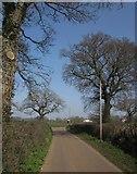 ST0705 : Oaks by the road, near Dulford by Derek Harper