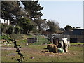 SU7505 : Marina Farm by Colin Smith