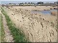 SU7504 : Sussex Border Path by Colin Smith