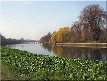 TQ1773 : River Thames near Marble Hill by Paul Gillett