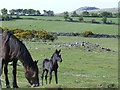 SX2570 : Moorland pony and foal by Eric Foster