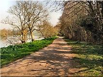 TQ1773 : Thames Path near Ham House by Paul Gillett