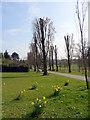 TQ3095 : Poplar Avenue, Oakwood Park, London N14 by Christine Matthews