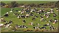 J4465 : Cattle near Ballygowan by Albert Bridge