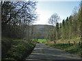 SE5884 : Descent through Abbot Hagg Wood by Pauline E